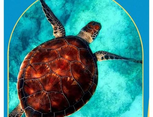 世界海龟日 | 这个节日,海龟宝宝们有话要说!